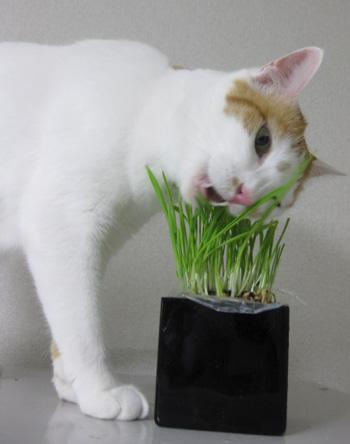 草草草~0701