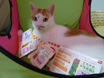 招き猫にゃ0713