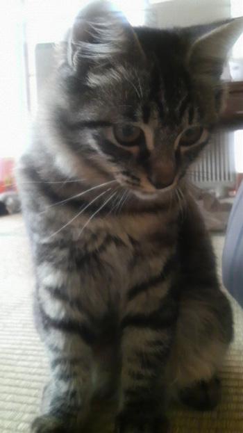 子猫時代0817