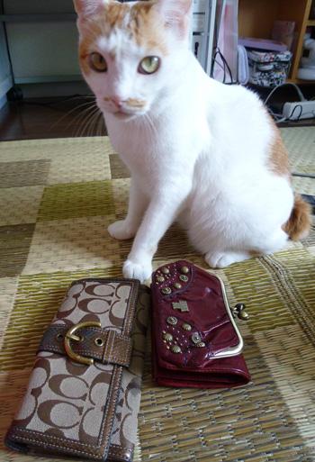 お財布変えるの?0907