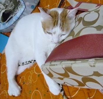いい枕ニャ0915
