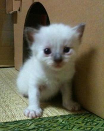 子猫ちゃん0921-2