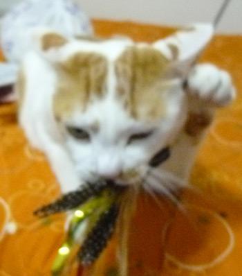 招き猫1210