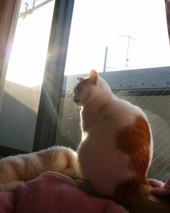 朝陽きらーん0206
