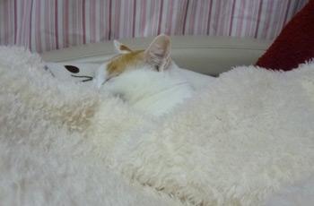眠いの0207
