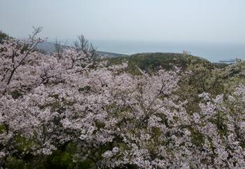 桜と空と海0412
