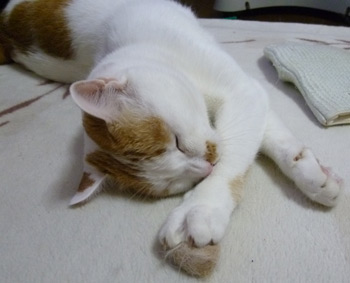 眠いニャ0504