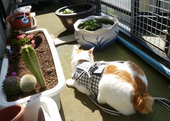 サボテンと猫と睡蓮鉢0509