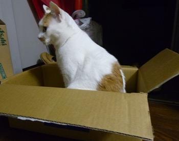 箱♪0602