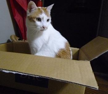 いい箱♪0602