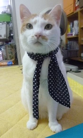スカーフが失敗0615