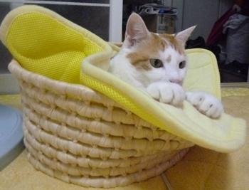 籠ベッド?0625