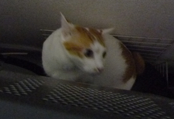 通行猫0723-6