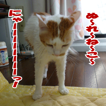 濡れ猫ニャ0919