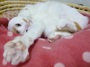 猫ぱーんち0928-3
