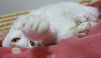 猫ぱーんち0928-6
