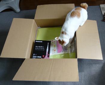検品猫1011