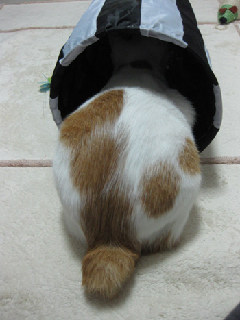 トンネルおちり2009.6月