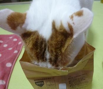 猫草栽培セット1112-3