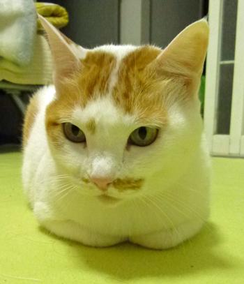 猫草栽培セット1112-5