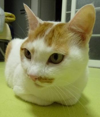 猫草栽培セット1112-6