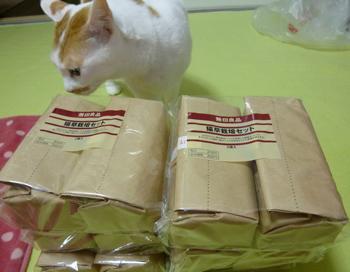 猫草栽培セット1112-1