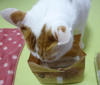 猫草栽培セット1112-2