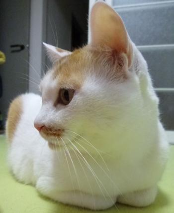 猫草栽培セット1112-7