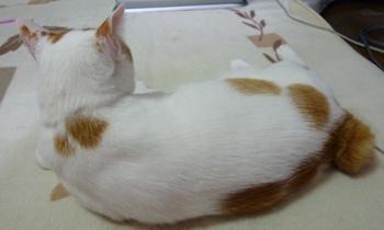 背中美人猫0120