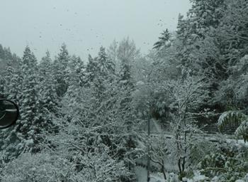 雪景色0124-1