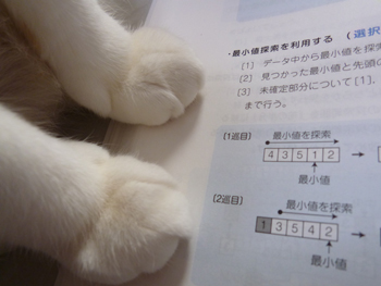 萌え萌え0228