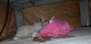ピンク毛布0302-3