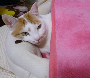 ピンク毛布0302-2