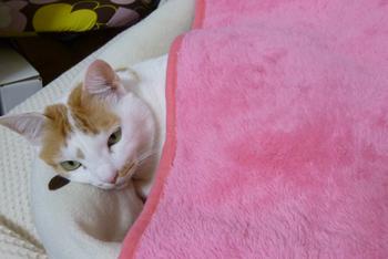 ピンク毛布0302-1