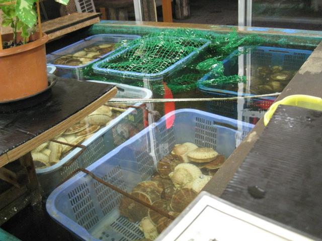 くいしんぼう函館20100814-03