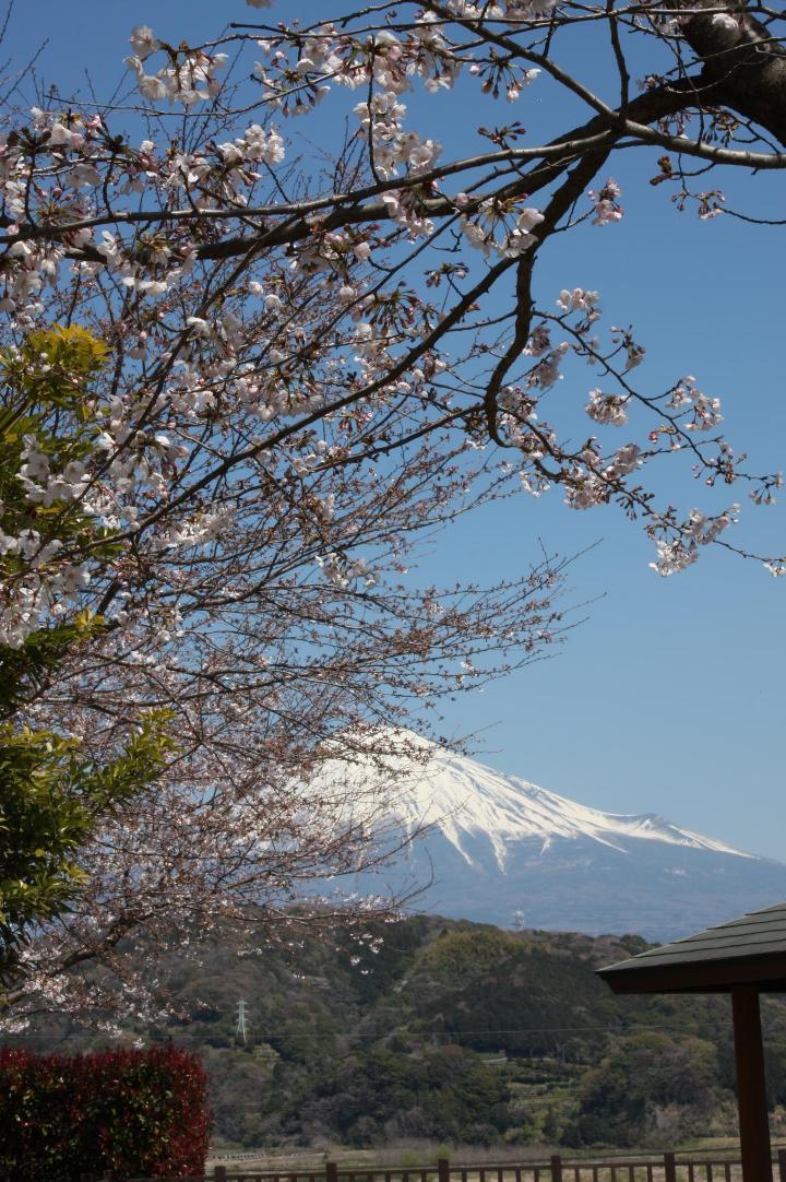 富士川SA上り20110405-03