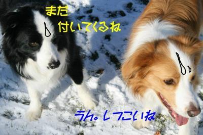IMG_6275_sh01.jpg