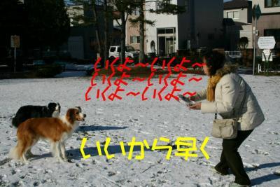 IMG_6289_sh01.jpg