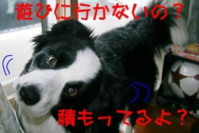IMG_6404_sh01.jpg
