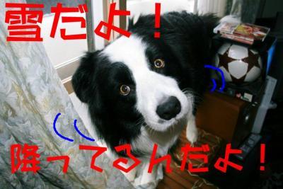 IMG_6408_sh01.jpg