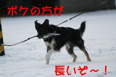 IMG_6534_sh01.jpg