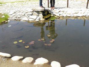 ザリガリ池