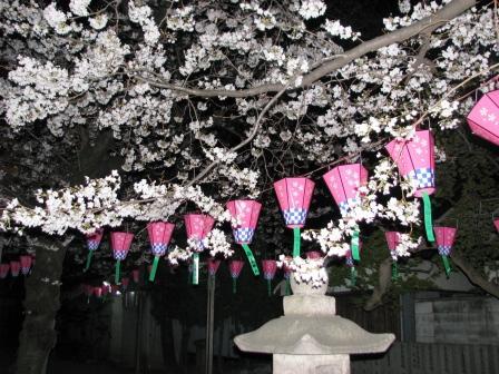 画像 720夜桜1