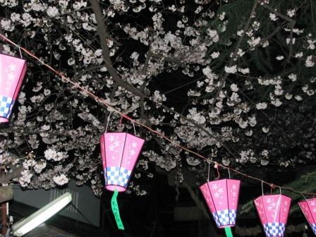 画像 713夜桜3