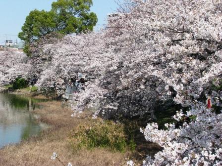 画像 757万代桜