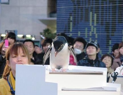 IMG_0151海遊館ペンギン2