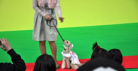 ペット王国2011 050ももちゃん
