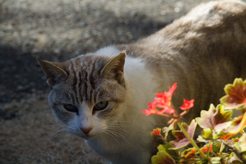 2_cat.jpg