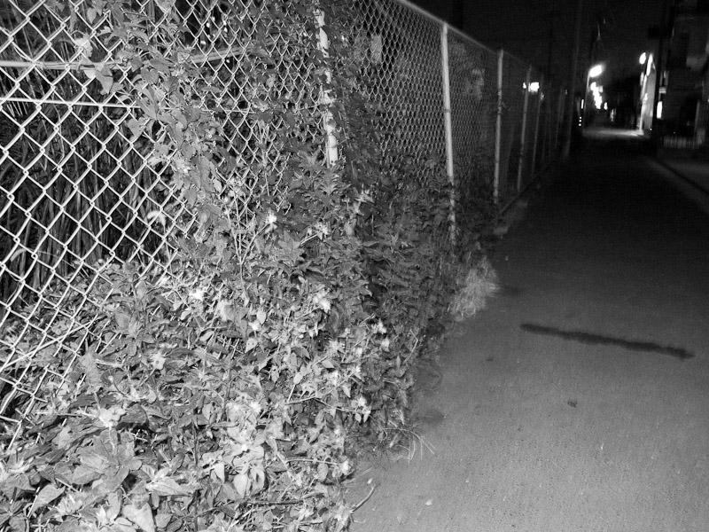 6_night-visions5.jpg