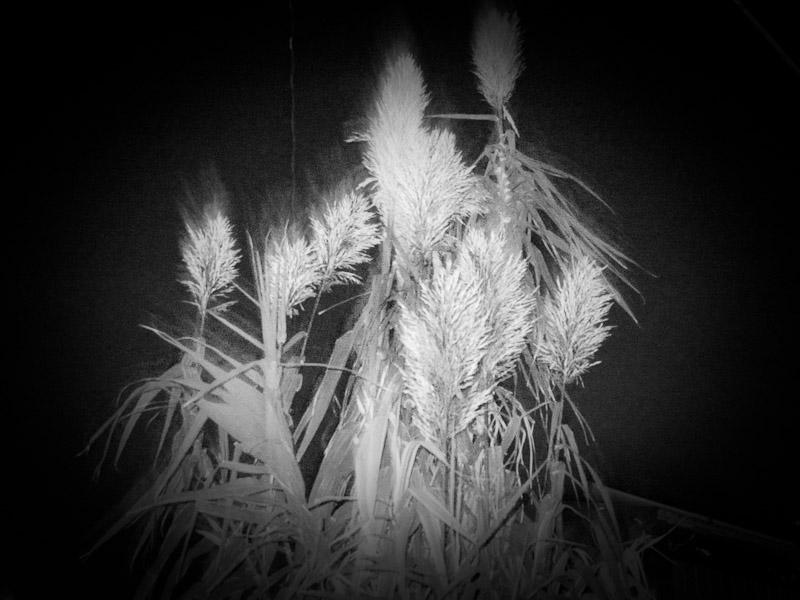 9_night-visions5.jpg